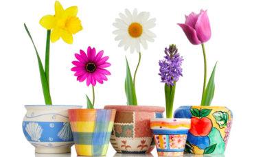 Flowering Pot Plants