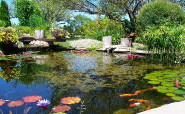 Water and Aquatic Plants