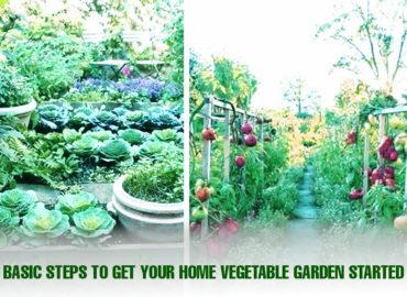 Basic Steps To Get Your Home Vegetable Garden Started | Sri rama nursery