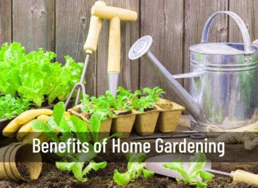 Benefits of Home Gardening | Home Gardening | Srirama Nursery